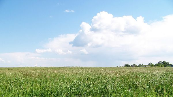 click to free download the wallpaper--images of nature - The Wheats Are Green, Far From Being Ripe, the White Clouds All Over