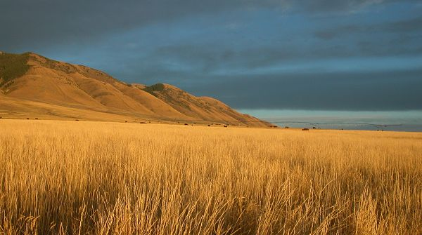click to free download the wallpaper--landscape image - The Blue Sky, Tall Hills and Wheats in Yellow, Shall Strike an Impression