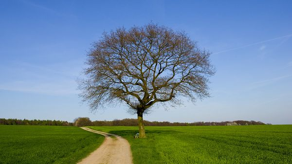 landscape photography - A Tall Tree in the Middle of Green Grass, Imagine Walking on the Narrow Road