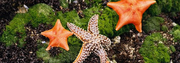 click to free download the wallpaper--landscape photography - Colorful Sea Stars Gathering, Is a Meeting Being Held?