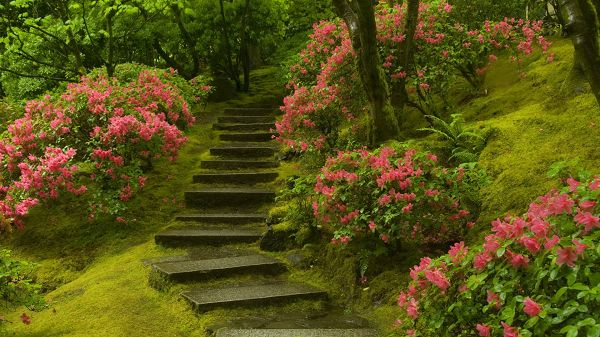 click to free download the wallpaper--landscape photography - Pink Flowers Along the Wet Steps, Fantanstic Walking Experience