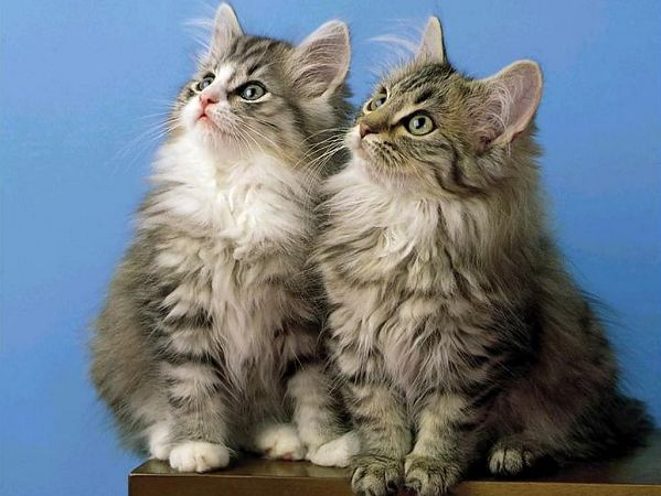 Lovely Cats Scenery Free Wallpaper