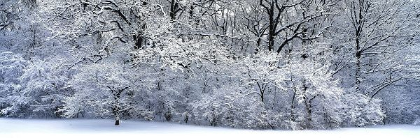 click to free download the wallpaper--natural scenery photos - A Heavy Snow is Gone, Everything is in White Clothes, Unbelieveable Scene!
