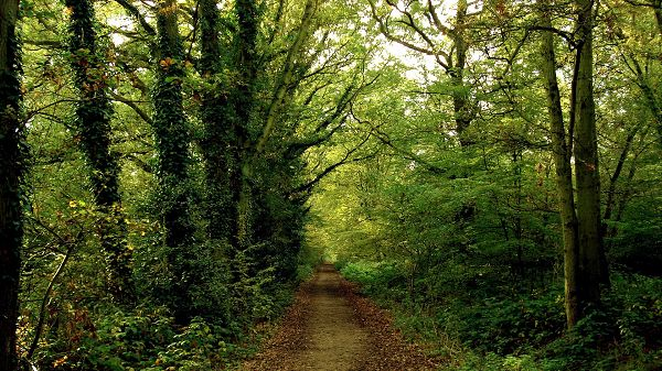 natural scenery photos - A Narrow and Straight Road, Tall and Green Trees Alongside, Great Walking Experience