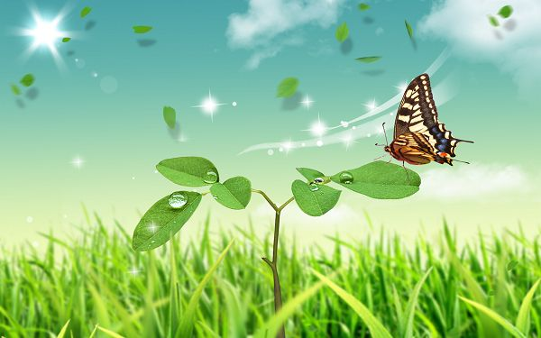 Natural Scenery Wallpaper: Butterfly And Green Plants
