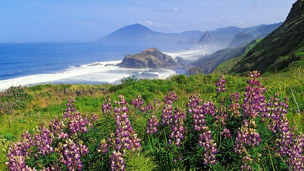 nature images - Purple Flowers in Full Bloom, Eyes Wide Open, Never Miss the Scene of the Sky and the Sea