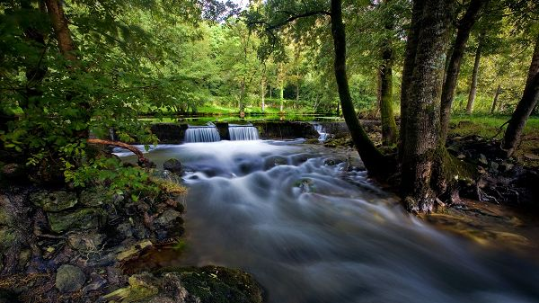 click to free download the wallpaper--nature images - The River in Steady and Rapid Flow, Tough Plants Alongside Are Never Down