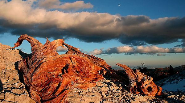 nature photos free download - The Blue Sky with White Clouds, Red Wooden Creatures Beneath