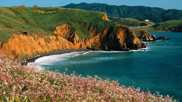 click to free download the wallpaper--nature scenes - Pink Flowers in Full Bloom, Crystal Clear Sea and Green Hills, What a Scene!