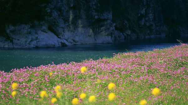 click to free download the wallpaper--picture of natural scene - Pink and Yellow Flowers Crossed, Peaceful Sea, They Are Never Thirsty