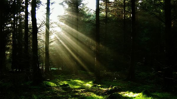 scenery photos - Dawn, the First Sunlight, the Dark Forest Will Soon be Bright