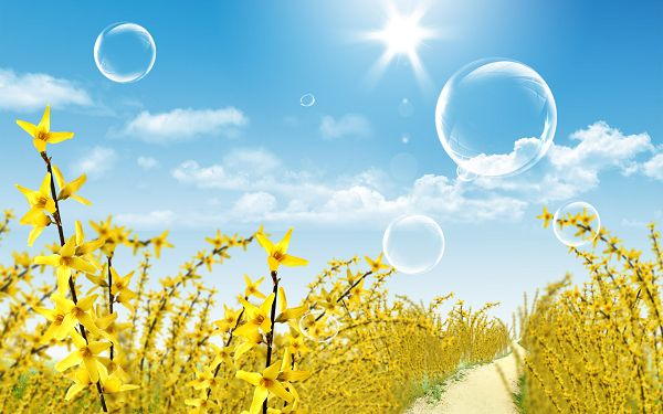 scenery wallppaer: yellow flowers in spring ,click to download