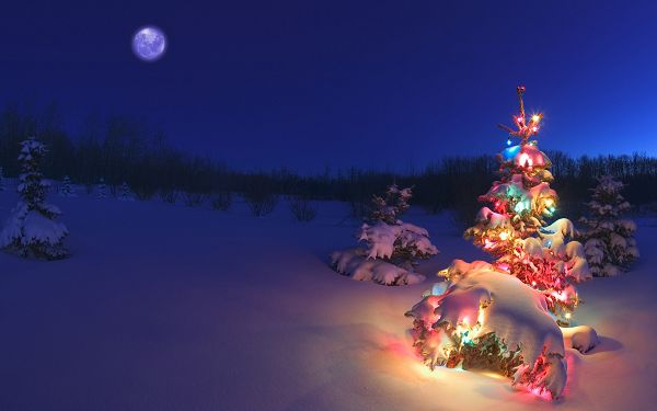 wallpaper of a Christmas tree in snowy night ,click to download