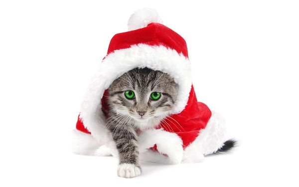 Wallpaper Of A Naught Cat Wearing The Clothes Of Santa Claus