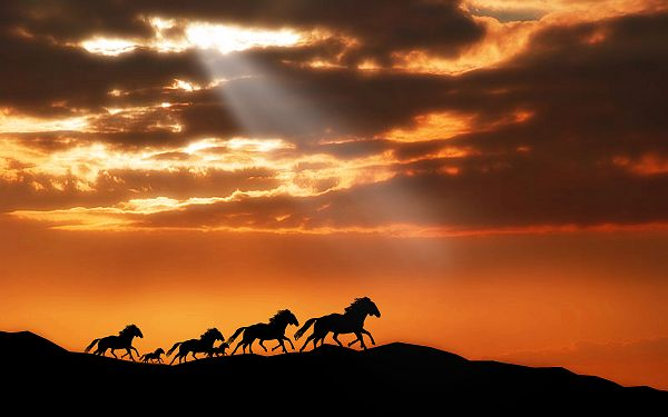 wallpaper of animal: several horses running in the dusk ,click to download