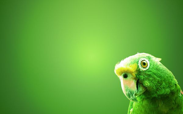 Wallpaper Of Animals: A Green Parrot On The Green Screen