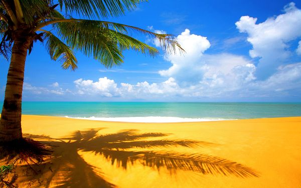 wallpaper of beach scenery: a beautiful shadow of palm near beach ,click to download