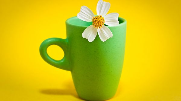 wallpaper of refreshing picture: a flower in the green cup ,click to download