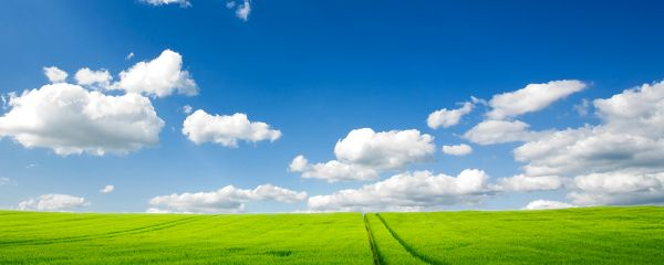 Wallpaper Of The Pure Natural Scenery: Vast Grassland