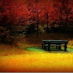 Free 3d Beautiful Autumn Scenery Computer Wallpaper Clean Beautiful Forest Red Leaves 1600*1200(11)