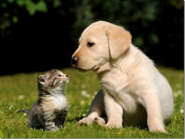 Funny cat and dog!