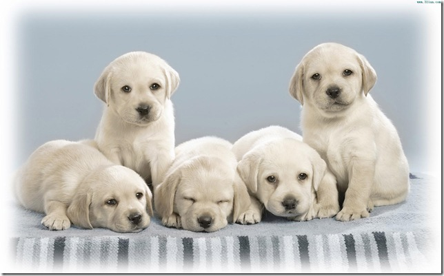 Six cute dogs for you, do y ou love the gift?