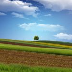 2015 HD Eye Protection Picture Wallpaper(11): Corn field and the vault of the heaven
