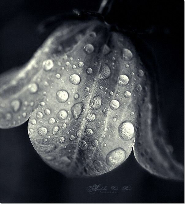 2015 A group of micro mode Wallpaper:  dewdrop