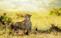 Free Download Cute Animals Wallpaper - Cheetah Savanna Africa Post, It Knows How to Protect Itself, Has Chosen a Perfect Place to Stay