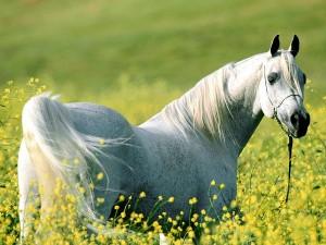 Beautiful Scenery Wallpaper: A Fine Horse In Flowering Shrubs