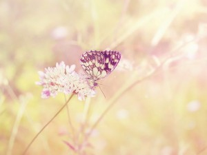 Free Animals Wallpaper, Light-Colored Butterfly on Blooming Flower