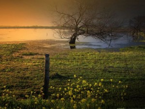 Nature Countryside Landscape, Blooming Flowers in Wild, a Field of Green Grass