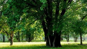 nature images - Tall and Green Trees in Prosperous Growth, Short and Green Grass