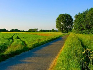 Nature Summer Landscape, Green Plants Alongside the Straight and Narrow Road