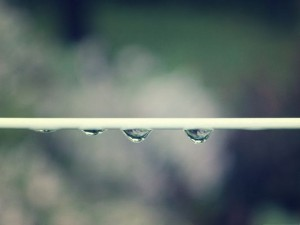 Background Wallpaper for Computer, Rain Drops About to Fall