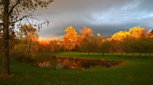 Natural Scenery pictures - Trees Painted Almost Golden, Green Field, the Dark Sky, Combine Quite a Scene