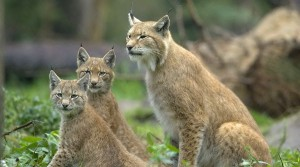 Free Download Cute Animals Picture - The Three Are All on Alert, You Shall Not Expect to be Too Close to Them