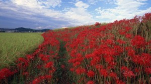 landscape wallpaper - Green Plants and Red Flowers, the Blue Sky, Quite a Contrast