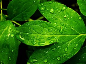 Amazing Landscape of Nature, Green Leaves, Waterdrops on, Fresh and Clean Scene