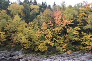 Maple Leaf 2018 Beautiful Scene HD