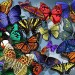 Wallpaper Of So Many Butterflies