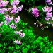 Beautiful Images of Nature Landscape, Purple Little Flowers and Green Grass, What a Contrast!