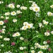 Summer Flowers Picture, White Blooming Flowers, Prosperous Growth