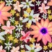 A Full Screen of Colorful Flowers, All Dancing and Singing with the Melody, Quite Pleasant to Look at – Creative Wallpaper