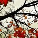 Beautiful Pics of Nature, Few Yellow Leaves on a Branch, Tough Living Condition, Cheer for You!