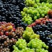 Amazing Fruits Image, Grape Harvest, Freshly Picked, Fruitful Season