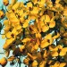 Yellow Flowers Photography, Be Generous and Decent as the Smiling Little Flowers