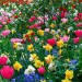 Spring Flowers Image, Colorful Flowers Among Green Leaves, What a Combination!