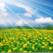 2016 Eye sight protection Beautiful wallpaper (1) sunflower