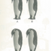 Interesting IQ Test Picture(4): Find the different penguin quickly